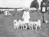 Miss Marjorie Lurcock with her team of white samoyeds at the Richmond Dog Show today. - 1928