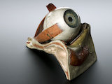 Model of human eye, by Louis Thomas Jérôme, France, 1870.