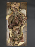 Wax anatomical model of a female showing internal organs, Florence, Italy, 1818.