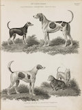 Full Page illustrations of dog breeds.