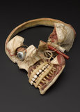 Wax anatomical model of female human head showing internal structure of skull, German(?), 19th century.