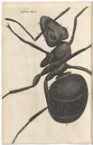 Plate XXXII from book: Micrographia, by Robert Hooke, 1665.