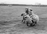 Girls racing wooly 'steeds'