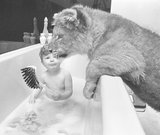 Bath for a lion cub?
