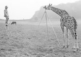 Photographer Giraffe