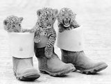 Leopard cubs in Wellies