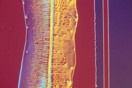 Silicon wafer with colloidal silica deposit, light micrograph, 1990s.