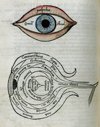 Structure of the eye, 1535.