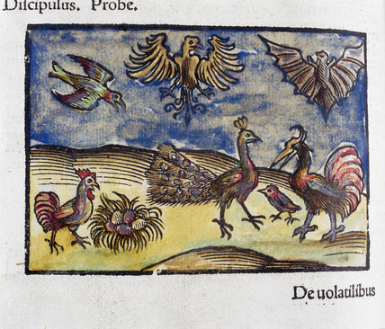 Birds and a bat, 1535.