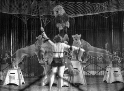 Woman lion tamer performing with circus lio