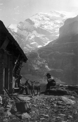 Two alpine goatherds with goats, c 1910s.