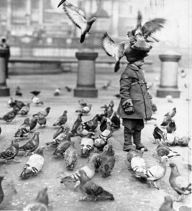 Pigeons landing on a young child's hat, 1932.