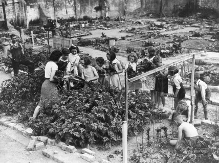 Young gardeners at work on their plots, Lon