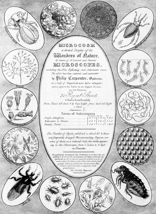 'Microcosm, a Grand Display of the Wonders of Nature' c 1827.