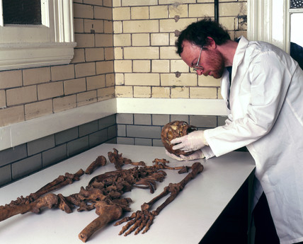 Skeleton of Bleadon Man, 1999.