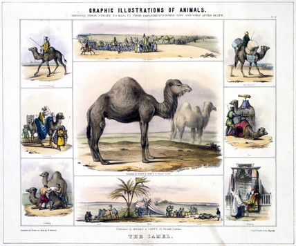 'The Camel', c 1845.