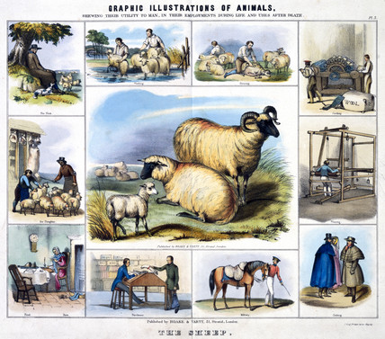 'The Sheep', c 1845.