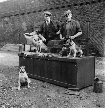 Ratcatchers with their dogs and dead rats, 1953.