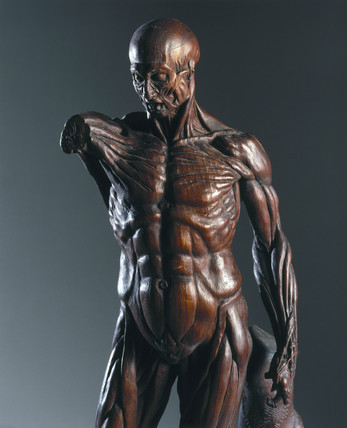 Carved wooden male anatomical figure, 1731-1770.