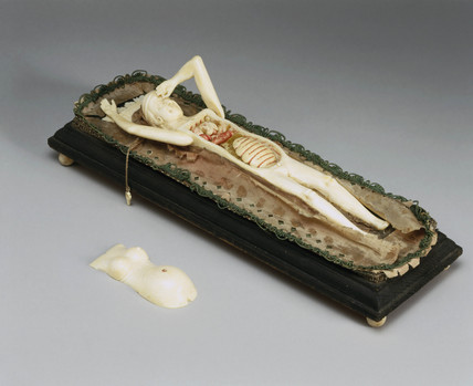 Ivory anatomical figure of a pregnant woman, posibly early 18th century.
