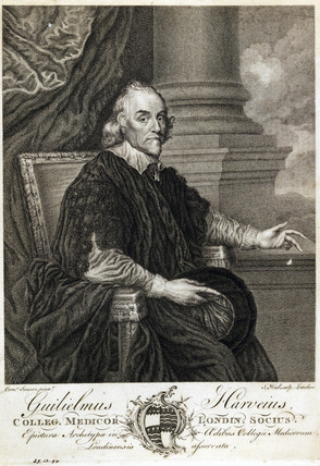 William Harvey, English physician, 17th century.