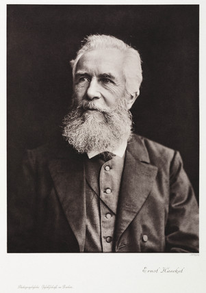 Ernst Haeckel, German naturalist, c 1910.