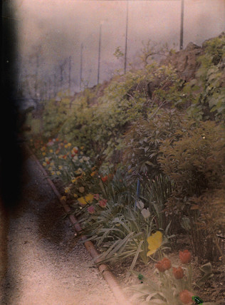 Autochrome of a herbaceous border, c 1910.