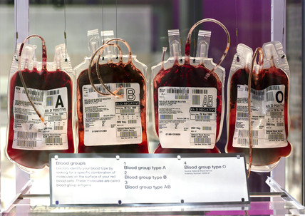 Bags of blood on display in the 'Who am I?' gallery, Wellcome Wing, 2003.