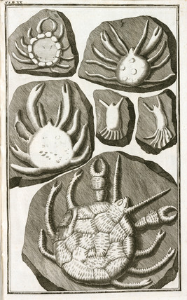 Fake fossil crabs, 1745.