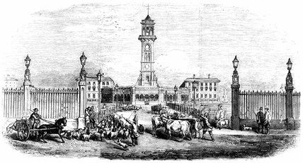 New Metropolitan Cattle Market, King's Cros, London, 1855.