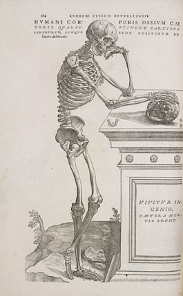 A human articulated skeleton seen from the side, 1543.