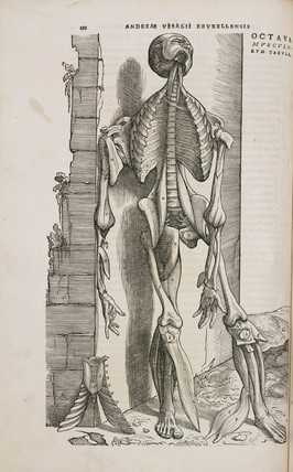 Front view of the bones and deeper muscles of the male human body, 1543.
