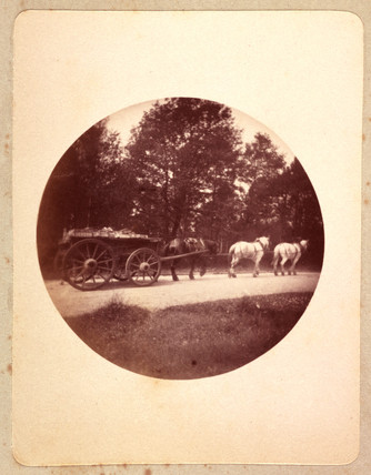 Three horses pulling a wagon, 1888.