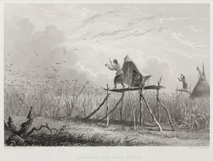 'Guarding the Corn Fields', North America, 1853.