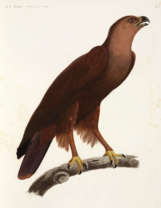 Shrill Eagle, Egypt, 1798.