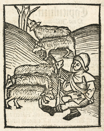 Shepherd with sheep, 1497.