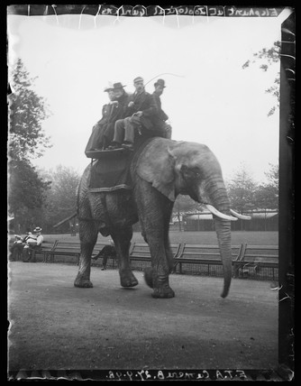 'Elephant At Zoological Gardens', 27 September 1898.