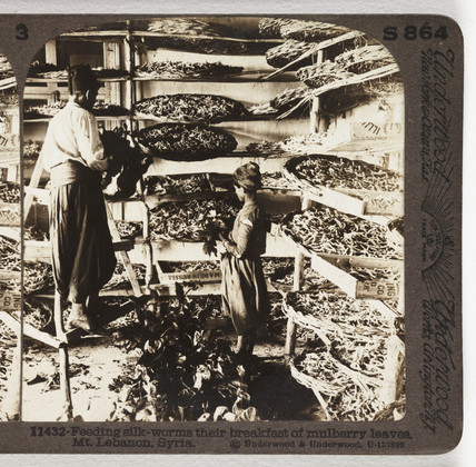 Feeding Silk Worms...', about 1900.