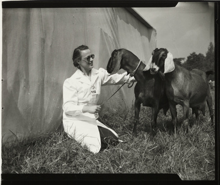 Anglo-Nubian goats at Bath and West Agriculture show, Cardiff, 30 May 1956.