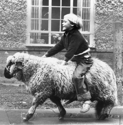 Susan Roper riding her sheep, 12 November 1956.