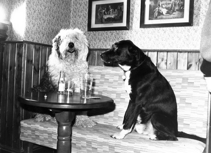 Dogs at the pub, January 1987.