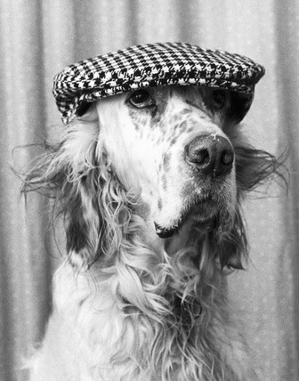 Dog wearing a cap, January 1980.