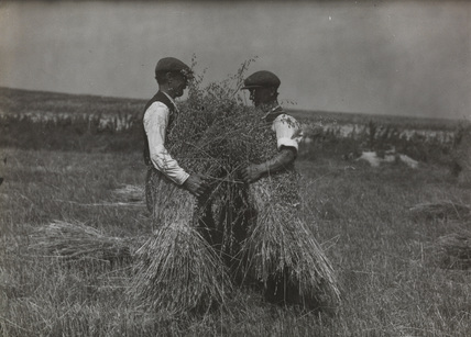Two farm workers harvesting oats at Gt. Chesterford, by Edward Malindine.