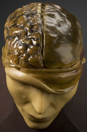 Anatomical model of human head, Europe, 1801-1900.