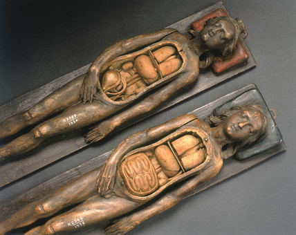 Two wooden anatomical figures, 17th century.