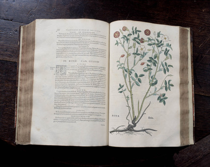 Leonhart Fuch's book on herbals, 1545.