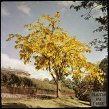 Dufaycolor view of a Laburnum Tree, Royal Victoria Park, May 1937