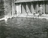 A swimming lesson in the Cross Baths, c.1950s