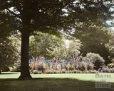 Summertime, Botanical Garden, Royal Victoria Park, Bath 1961