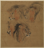 Four studies of a lion's head